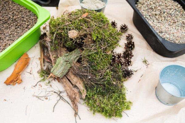 elementy do stworzenia lasu w słoiku
